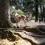 2014 Japan - Dag 8 - tom-SAM_0536-0041.JPG