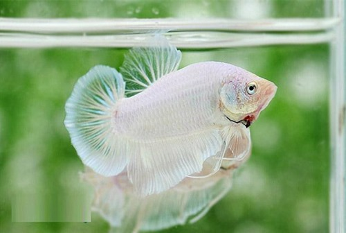 betta-fish-5-gallon-fish-tank-(32)