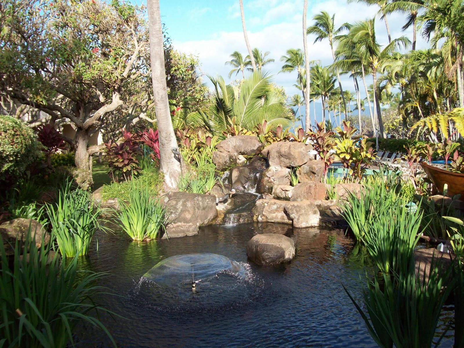 Hawaii Day 6 - 114_1716.JPG