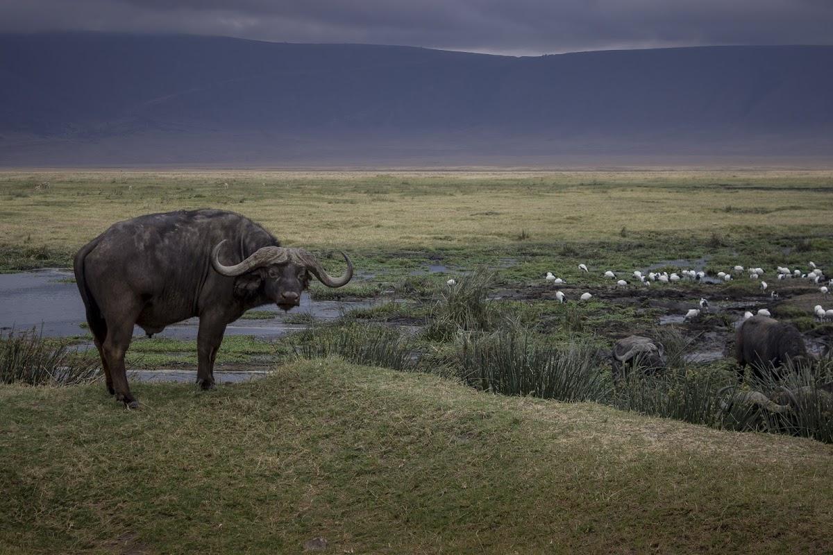 TanzaniaIMG_1314.jpg