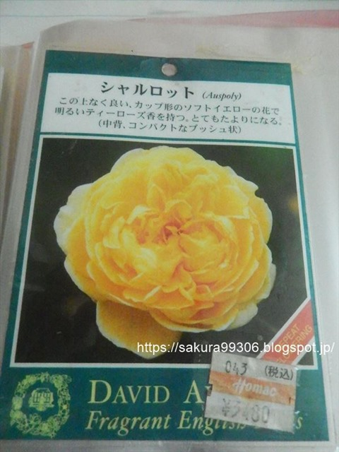 DSCN5617_R