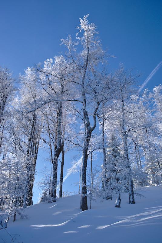 Zapada proaspata si copaci imbracati in zapada.