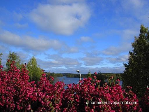 Зимние цветы сажают в Финляндии осенью