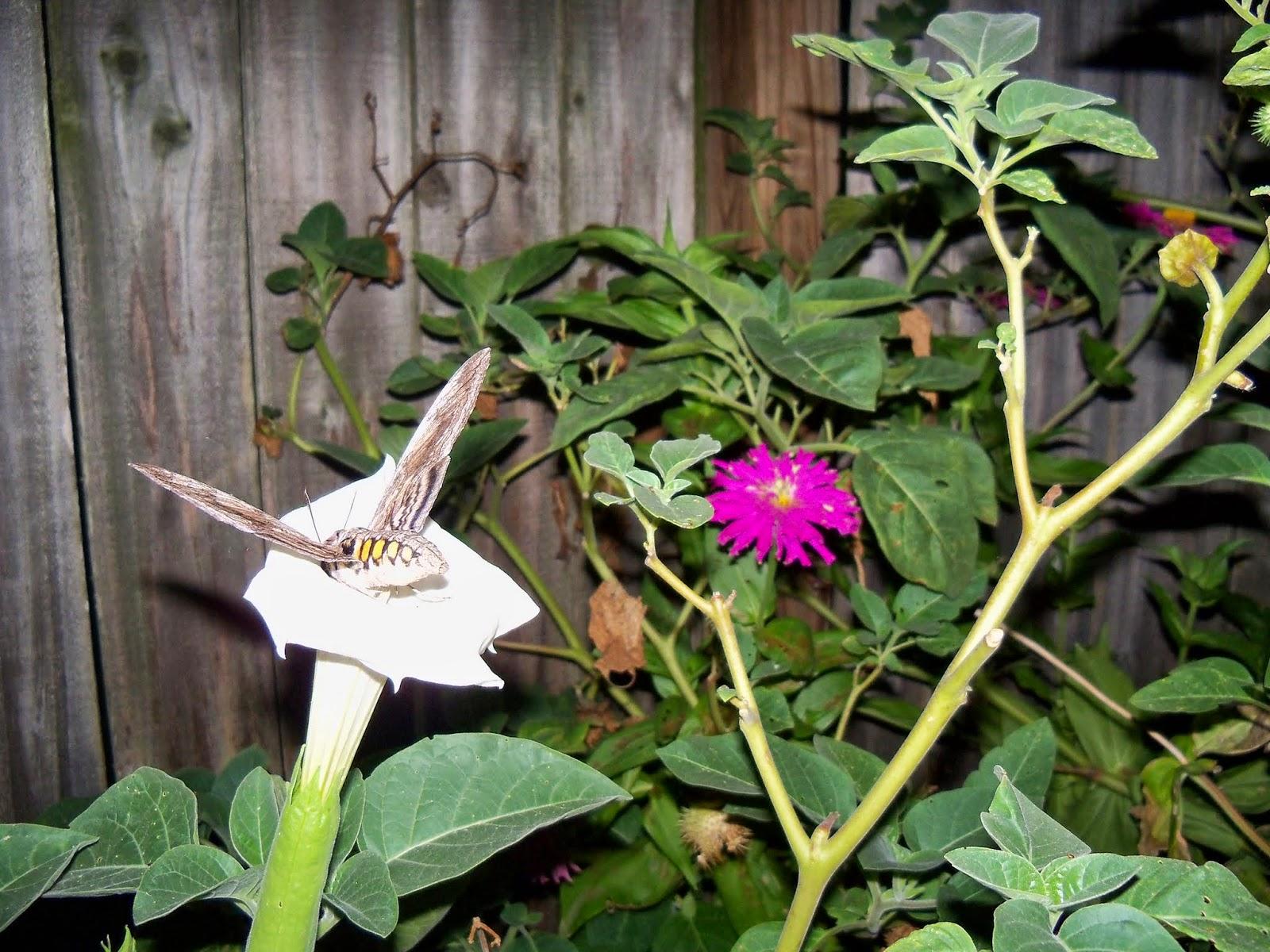 Gardening 2014 - 116_3617.JPG