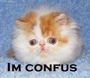 confused%2Bcat.jpg