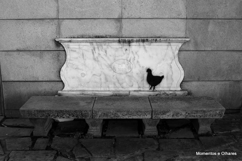 A galinha e o banco