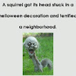 Squirrel Terrifies A Neighborhood by stucking head in a Halloween Mask - Astonishing Top 10
