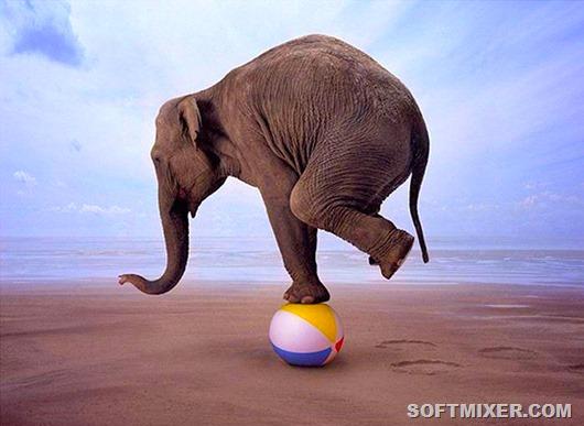 Цирковой-слон-фото