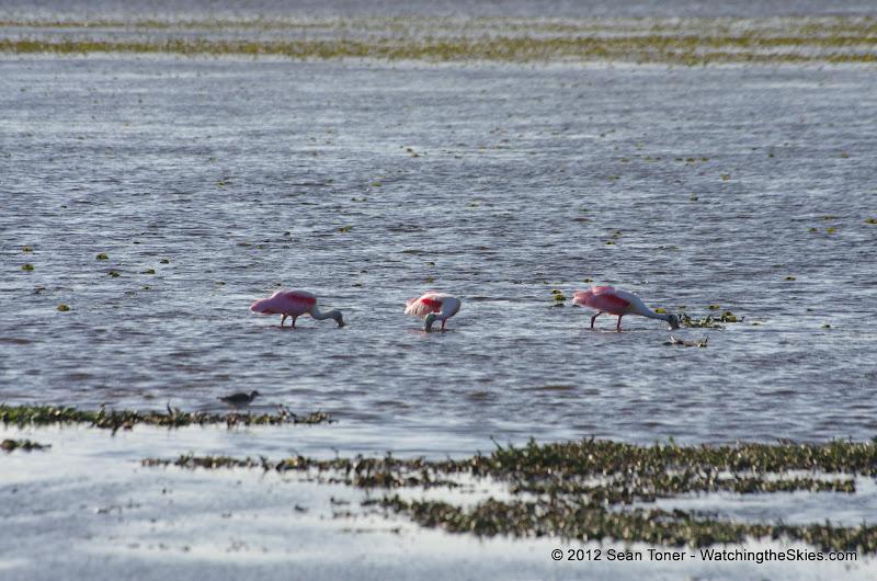 04-06-12 Myaka River State Park - IMGP9923.JPG