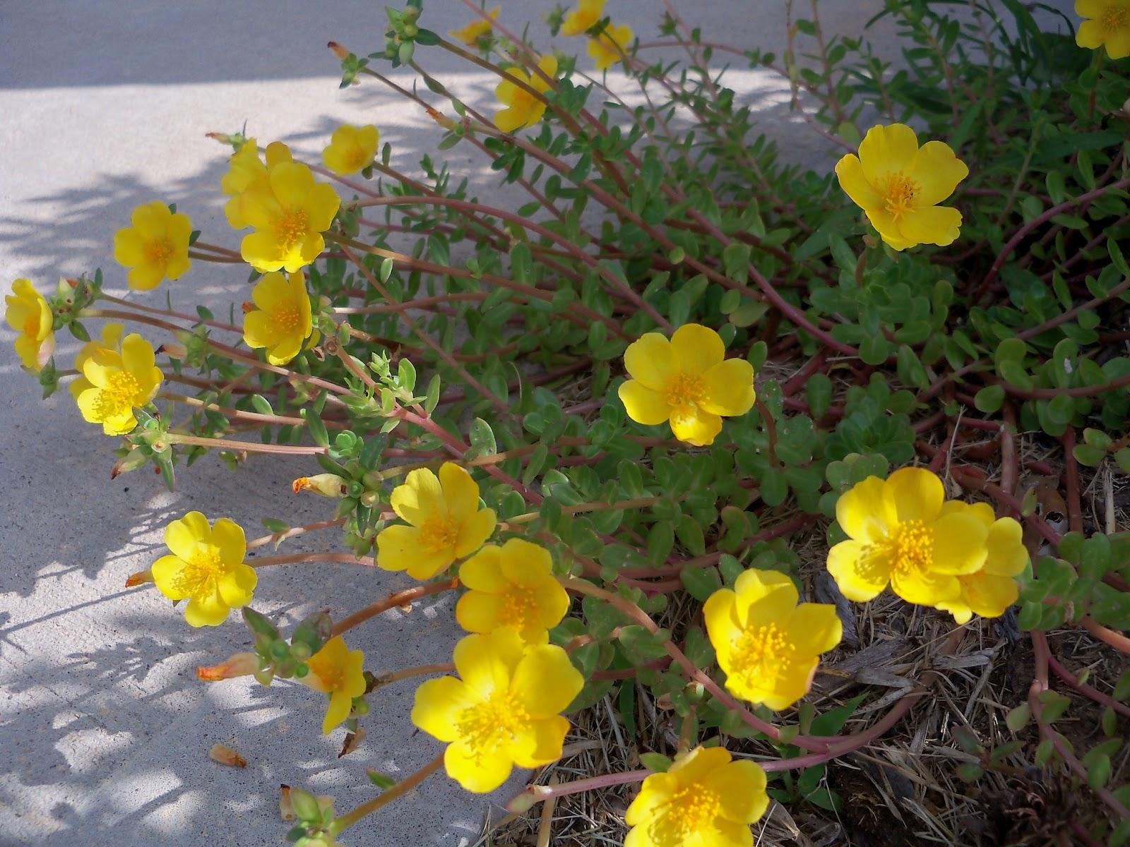 Gardening 2012 - 115_1713.JPG