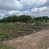 OLGC Garden Ministry 2014 - April%2B2016%2B2.jpg