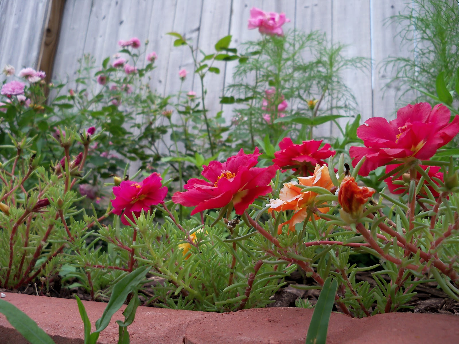 Gardening 2010, Part Two - 101_2407.JPG