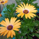 Gardening 2015 - 116_7627.JPG