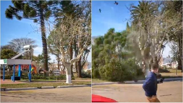 Inriville, cortaban el árbol de una plaza y cayó sobre estación solar