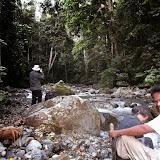 En forêt. Pulau Bacan (Moluques, Indonésie), 8 septembre 2013. Photo : Eko Harwanto