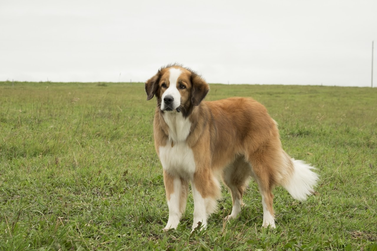 A Dog S Purpose Meaning