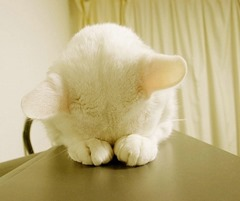 Cute=Cat01 (3)