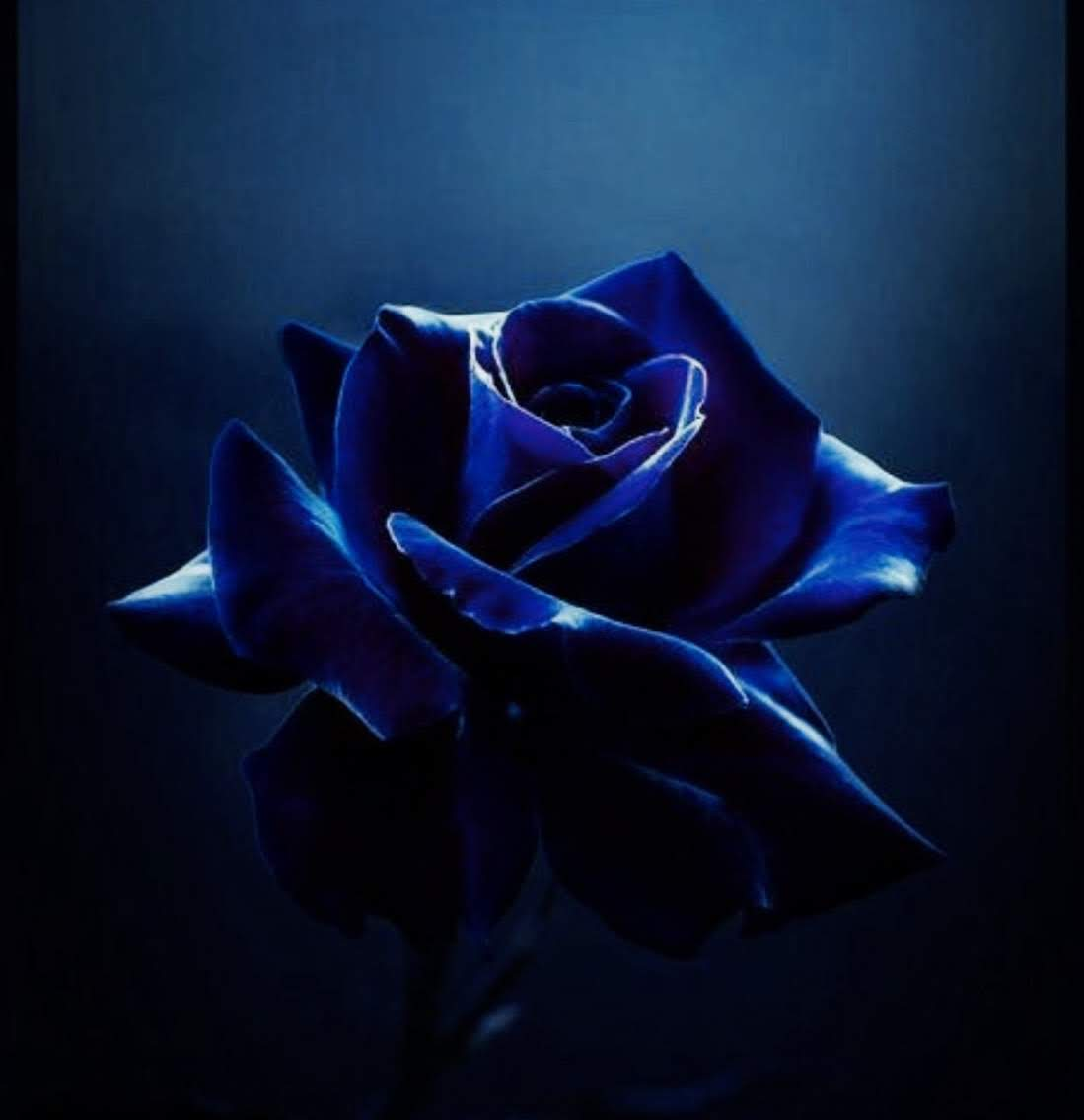 Blue Rose Blog