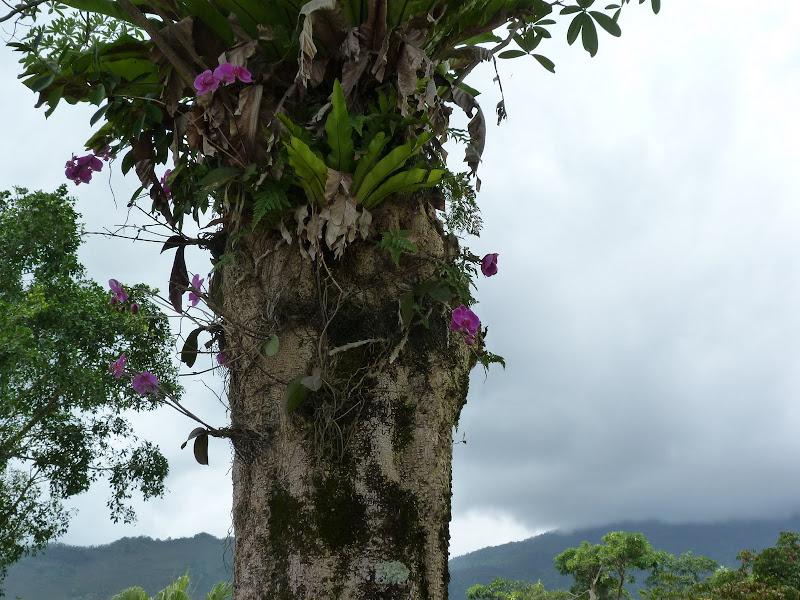 TAIWAN Dans la region de Hualien. Liyu lake.Un weekend chez Monet garden et alentours - P1010702.JPG