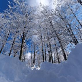 Winter by Dalibor Jud - Landscapes Forests ( gorski kotar, winter, zima, snow, croatia, snijeg, hrvatska, delnice, petehovac )