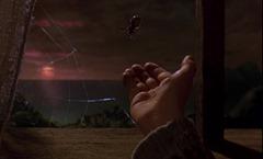 06 l'araignée réelle