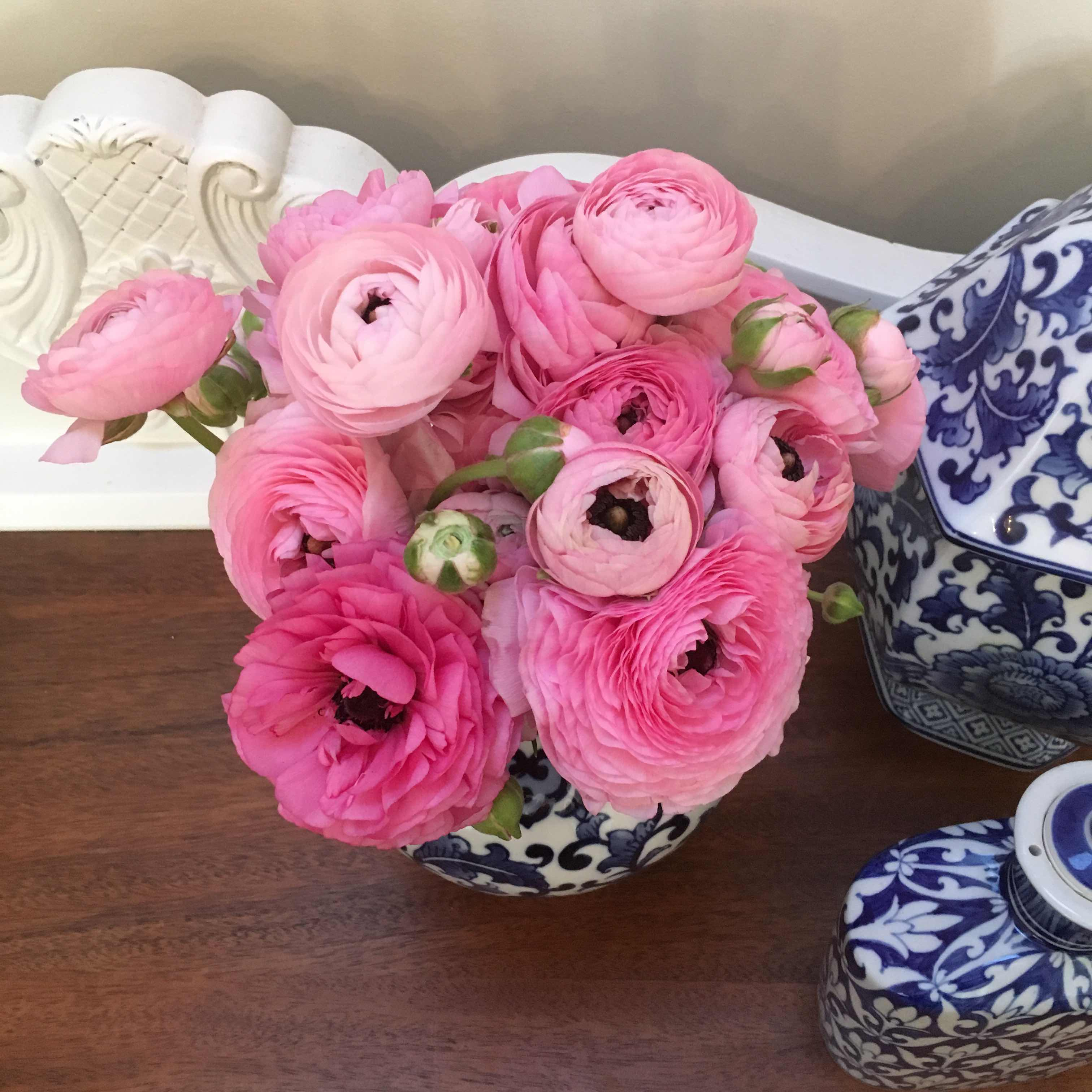 beautiful flowers Lilyfield Life