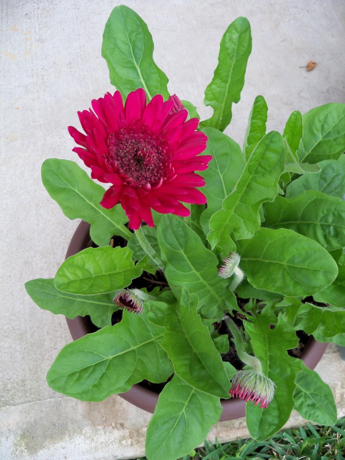Gardening 2011 - 100_7215.JPG