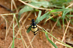 Der er også mange flotte insekter.