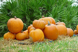Photo: Pumpkin Patch, Celebration, FL