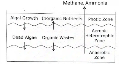 Oxidation ponds