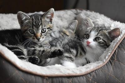 Memanjakan Kucing dengan Baik