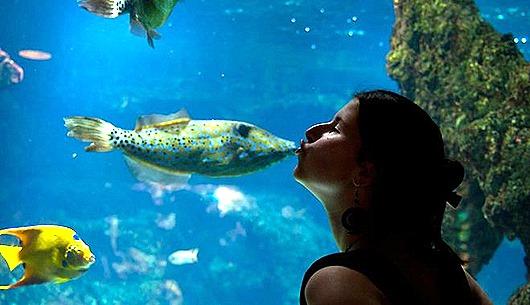zivis-akvarijs-46607983
