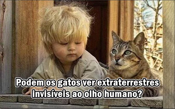Podem os gatos ver extraterrestres invisíveis ao olho humano