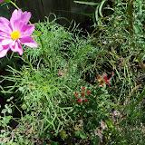Gardening 2010, Part Three - 101_4370.JPG