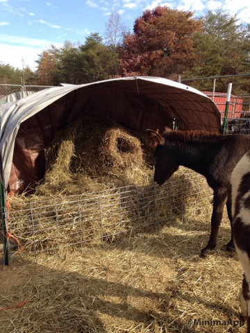 DIY Hay Feeder! Reduce wasted hay and save money!