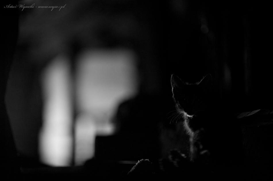 Artur Wysocki - fotografie