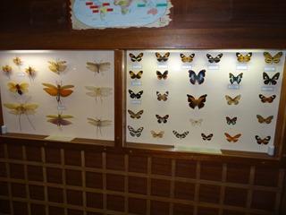 2016.03.14-009 papillons
