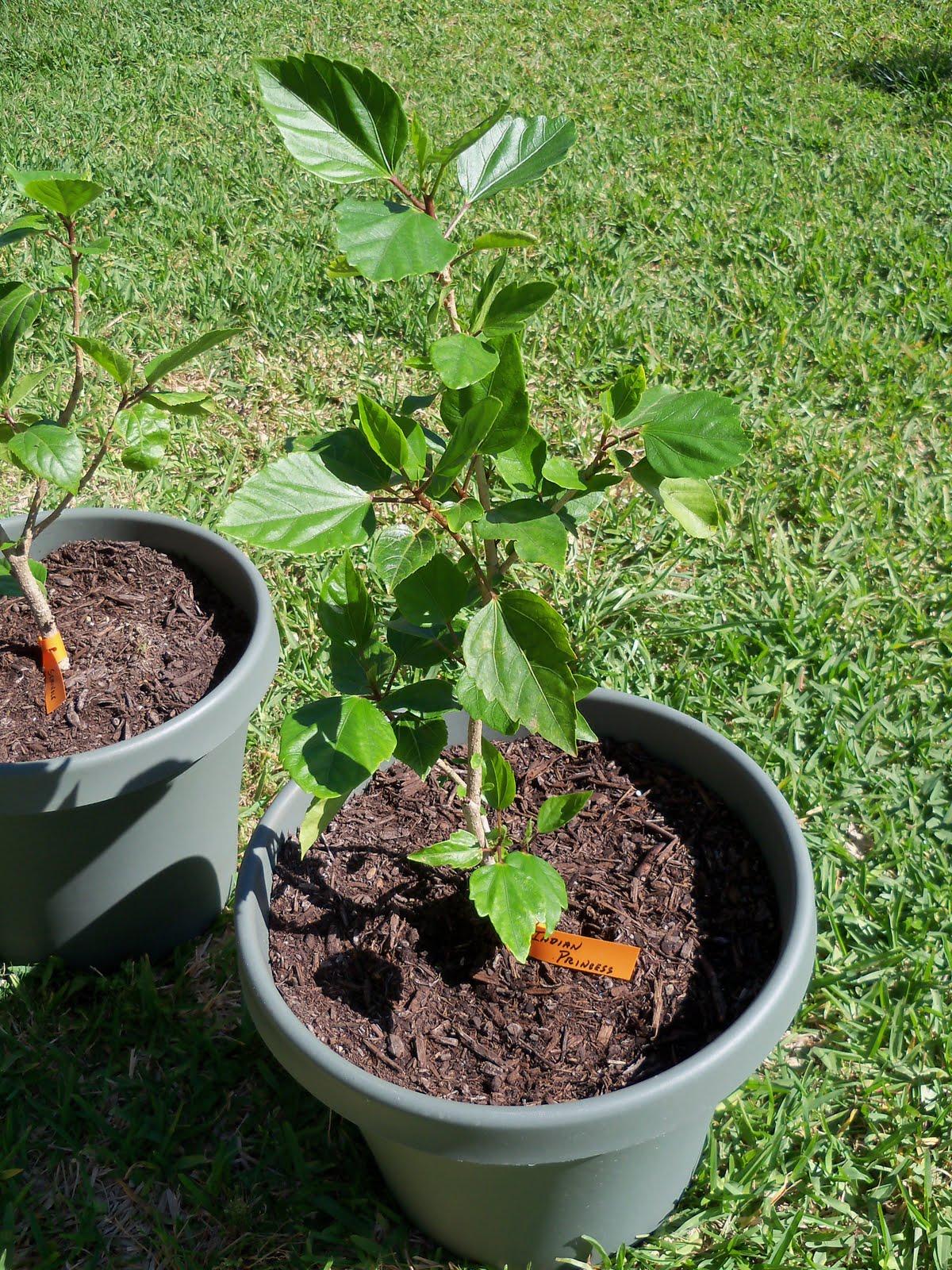 Gardening 2010 - 101_1362.JPG