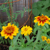 Gardening 2010, Part Three - 101_3573.JPG