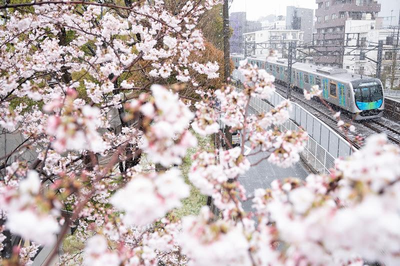200329 雪と桜と西武電車