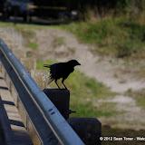 04-06-12 Myaka River State Park - IMGP4425.JPG