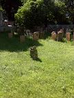 Der jüdische Friedhof - typischer Lost Place in der Seegasse