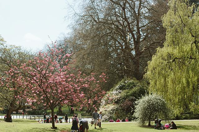 blossom in st fagans castle gardens
