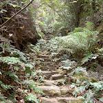 Stairs down to Centennial Glen (13882)