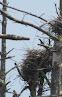 Heron Colony at Libby Hill-002.JPG