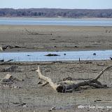 01-19-13 Hagerman Wildlife Preserve and Denison Dam - IMGP4056.JPG