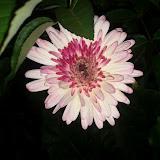 Gardening 2012 - IMG_20120404_193834.jpg
