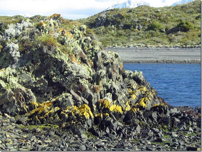 Ushuaia_ilha-H-vegetacao-algas-pedras