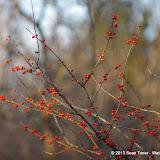 01-05-13 Arbor Hills Nature Preserve - IMGP3979.JPG