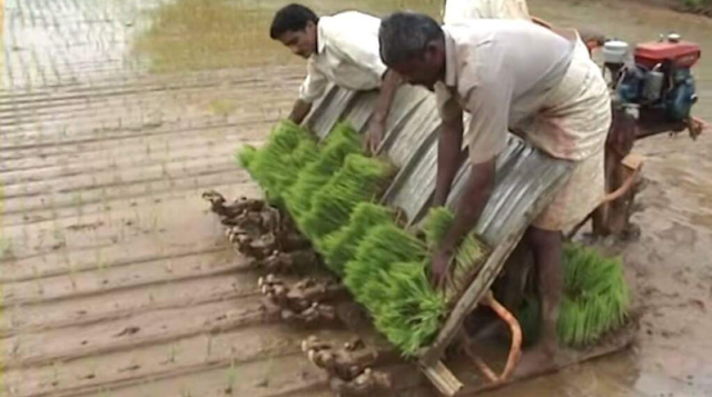 Mesin traktor dimodifikasi untuk menanam padi